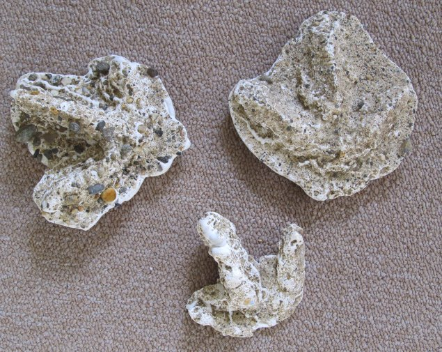 Plaster and sand casts of wild turkey footprints by Rebecca Haughey (Maine).