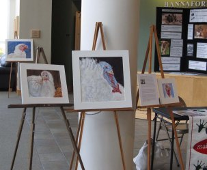 """Annual turkey portraits on display at the screening of """"The Ghosts in Our Machines"""" at the University of Southern Maine."""