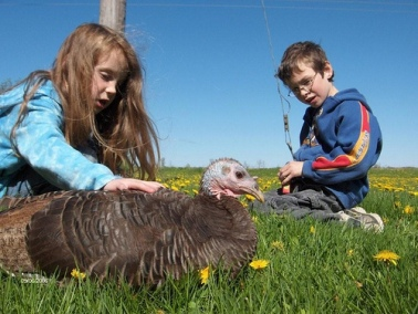Thelma with Cicada and Patrick at Cedar Row Sanctuary in South Western Ontario, Canada.
